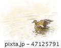 泳ぐカモ 水彩画風 47125791