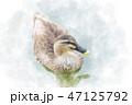 泳ぐカモ 水彩画風 47125792