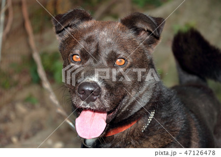雑種犬飼育中 47126478