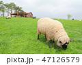 宮城県 ふれあい牧場 蔵王ハートランド 47126579