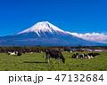 (静岡県)富士山・朝霧高原の牧場 47132684