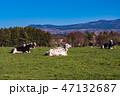 (静岡県)朝霧高原牧場 47132687