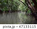 マングローブ原生林1 47133115