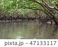 マングローブ原生林2 47133117