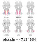 首回りの筋肉まとめ 名称入り 47134964
