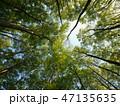 森 新緑 ぶなの写真 47135635