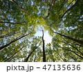 森 新緑 ぶなの写真 47135636