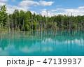 白金青い池 47139937