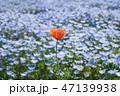ネモフィラ畑に咲くハートの花 47139938