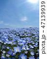 ネモフィラ畑 47139939