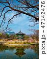 香遠亭 景福宮 春の写真 47142476