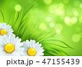 ベクター 草 カモミールのイラスト 47155439
