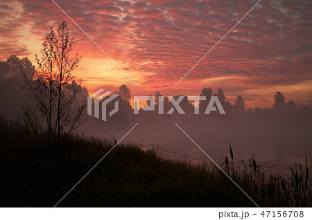 Beautiful orange pink sky over peaceful forest. Foggy autumn sunrise. Trees silhouette, lonely dock 47156708