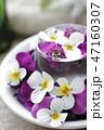 花 ビオラ アレンジメントの写真 47160307