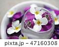 花 ビオラ フラワーアレンジメントの写真 47160308