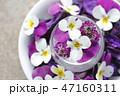 花 ビオラ フラワーアレンジメントの写真 47160311