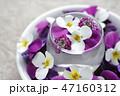 花 ビオラ フラワーアレンジメントの写真 47160312