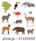 ベクトル 野生動物 アメリカのイラスト 47165693