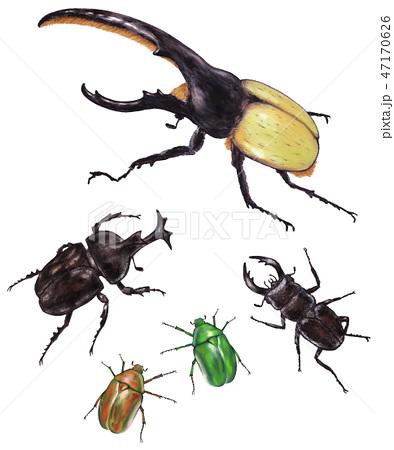 昆虫集合 ヘラクレスオオカブトカブトムシクワガタカナブンの