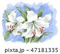 lily19117pix7 47181335