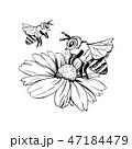 授粉 ハチ ミツバチのイラスト 47184479