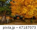 銀杏 秋 紅葉の写真 47187073