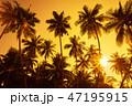 ヤシ ジャングル 密林の写真 47195915