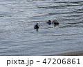 浮上するスキューバダイバー 47206861