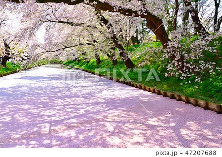 桜景 弘前公園 47207688