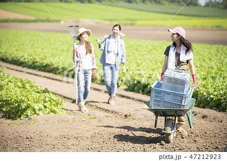 女性 農業 仲間 47212923