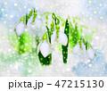 雪とスノードロップ 47215130