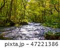 奥入瀬渓流 渓流 新緑の写真 47221386