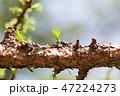 芽 蕾 花の蕾の写真 47224273