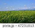 風景 秋 米の写真 47231013