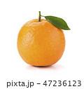 グレープフルーツ くだもの フルーツの写真 47236123