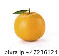 グレープフルーツ くだもの フルーツの写真 47236124
