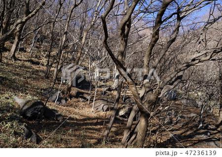 群馬県赤城山の荒山ふもとの大穴エリアの山腹に散在する岩 47236139