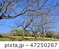 牧場 木 木々の写真 47250267