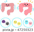 弱った腸と元気な腸、腸内細菌のキャラクター 47250323