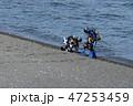 大瀬岬のスキューバダイバー 47253459