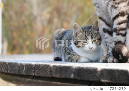猫の親子 47254230