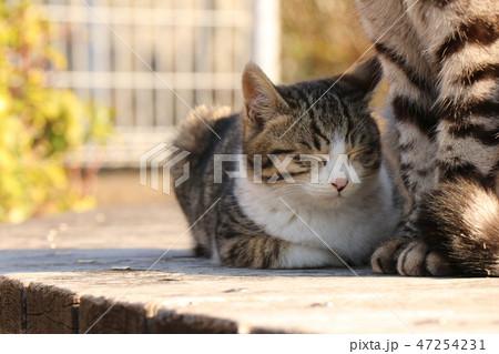猫の親子 47254231