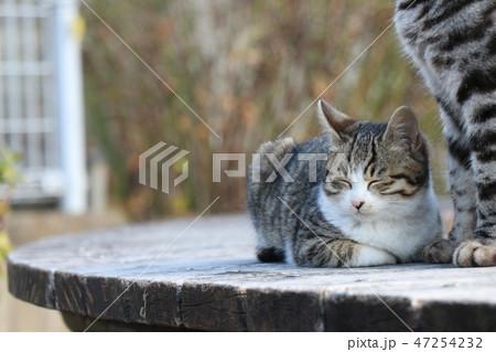 猫の親子 47254232