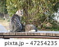 猫の親子 47254235