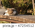 子猫 47254512