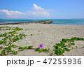海 緑 カヤックの写真 47255936