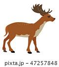 deer cartoon vector 47257848