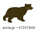 くま クマ 熊のイラスト 47257849