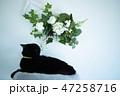 花の匂いを嗅ぐ黒猫 47258716