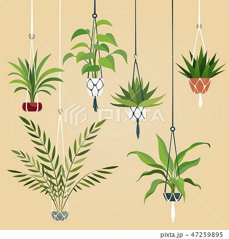 Hanging house plant. Indoor plants with macrame hanger. Scandinavian interior planting vector set 47259895